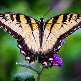 Swallowtail Beauty by Mary Ann Artz