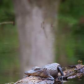 Swamp Life by Susan Rissi Tregoning