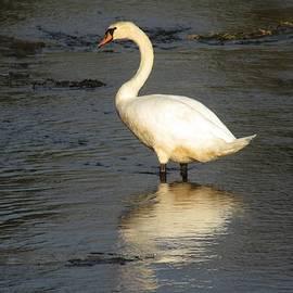 Swan 3 by Vesna Martinjak