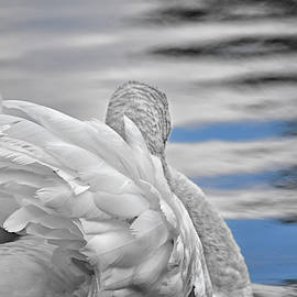 Swan in the Clouds B and W by Maria Keady