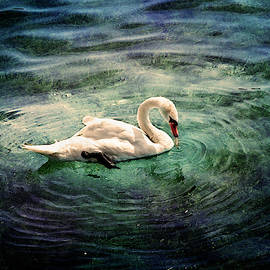 Swan, Lake Constance Germany by Yuri Lev