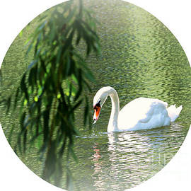 Swan Lake Round by Diann Fisher