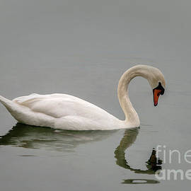 Swan Reflection by Michelle Meenawong