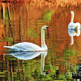 Swans by Debbie Stahre
