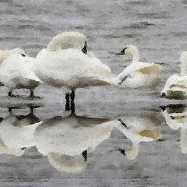 Cathy Lindsey - Swans Reflected 5