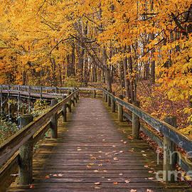 Sweet Autumn Memories by Rachel Cohen