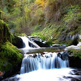 Sweet Creek Falls Oregon by Dragon Photography