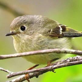 Sweet Little Birdie  by Lori Frisch