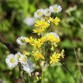 Sweet Little Weed Wildflowers by Kathy Clark