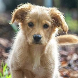 Sweet Pup by Mary Ann Artz