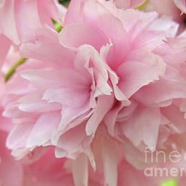 Sweet Sakura by Kim Tran
