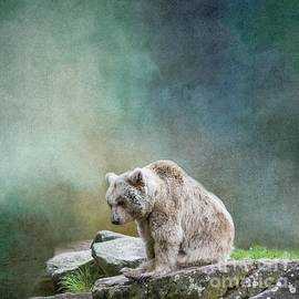 Syrian Brown Bear-3 by Eva Lechner