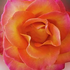 Tahitian Sunset Bloom by Julieanne Case