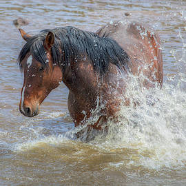 Taking a Bath - South Steens Mustangs 0983 by Kristina Rinell