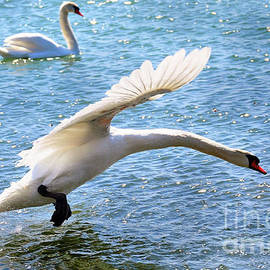 Elaine Manley - Taking a Flying Leap