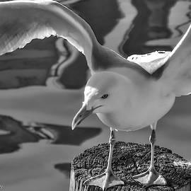 Taking Flight by Kathi Isserman