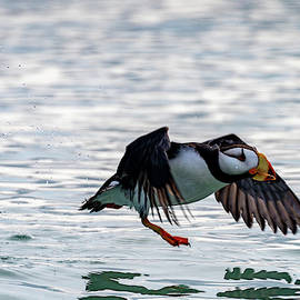 Taking Off by Mark Hunter