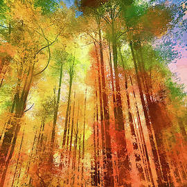 Tall Autumn Trees ap by Dan Carmichael