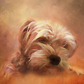 Tan Colorful Puppy by Terry Davis