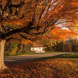 Tapestry Of The Trees by Jim Love