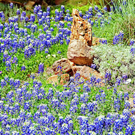 Texas Bluebonnets by Greg Reed