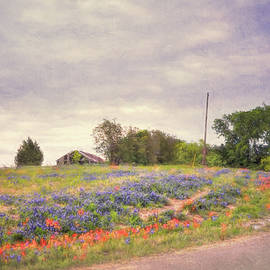 Texas Bluebonnets Textured  by Andrea Anderegg