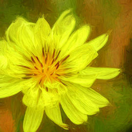 Texas Dandelion Painted by Judy Vincent