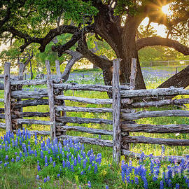 Texas Fence by Inge Johnsson