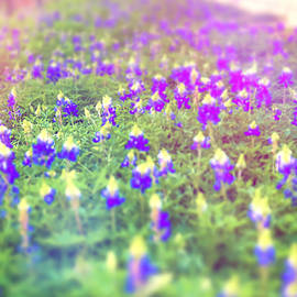 Texas Hill Country Bluebonnets by Dan Sproul