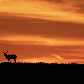 Texas Sunset and Buck Antelope by Gary Langley