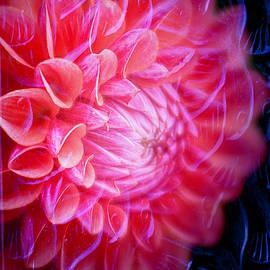 Textured Dahlia by TL Wilson Photography by Teresa Wilson