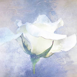 Textured White Rose by Terry Davis