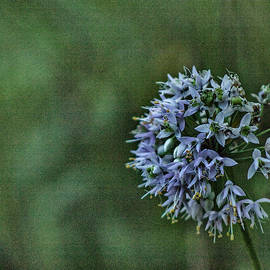 Textured Wildflowers by Denise Harty
