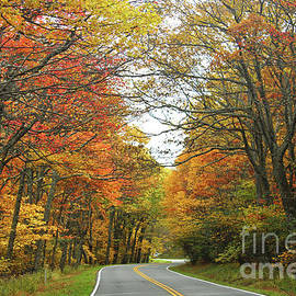 The Autumn Curves of Skyline Drive in Shenandoah National Park by Maili Page