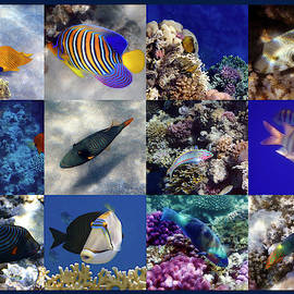 The Beautiful And Colorful Red Sea Sealife Collage by Johanna Hurmerinta