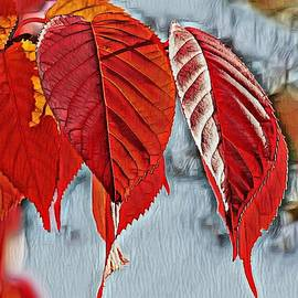 The Beauty of Fall by Teresa Trotter