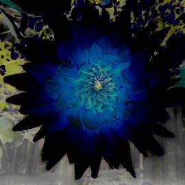 The Black and Blue Dahlia by Steve Taylor