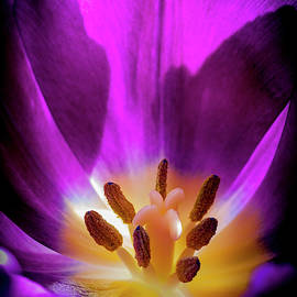 The Bloom Within by Robert Potts