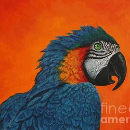 The blue-and-Gold Macaw by Louise Williams