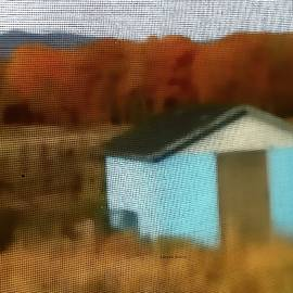 The Blue Shed by Lenore Senior