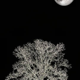 The Christmas Moon by JC Findley
