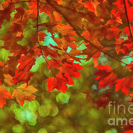 The Color Of Autumn Maple Leaves by Janice Pariza