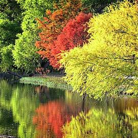 The Colors of Fall on Cibolo Creek by Lynn Bauer