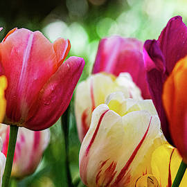 The Colors of Spring by Mary Ann Artz