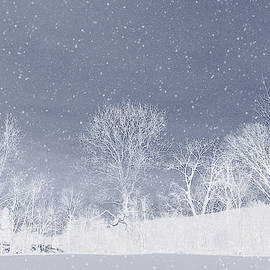 Andrea Swiedler - The Colors of Winter