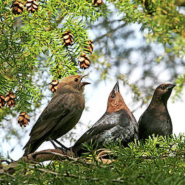 The Cowbird Family - So Happy Together by Peggy Collins