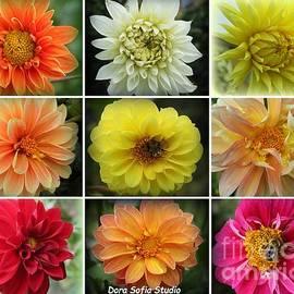 The Dahlias of Early Autumn - A Collage by Dora Sofia Caputo Photographic Design and Fine Art