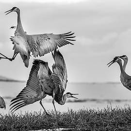 The Dance  by Kevin Dietrich