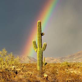 The Desert Reward by Cathy Franklin