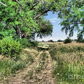The dirt road less trodden by Jeff Swan
